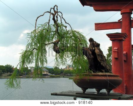 Bonsai Tree Willow