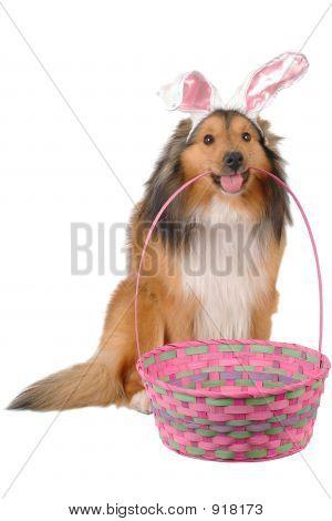 Cute Easter Dog 2