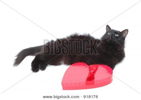 Romantic Cat 7
