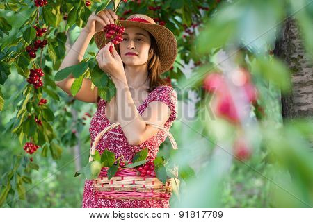 Young woman harvesting cherries