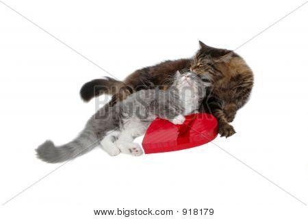 Cute Romantic Cats