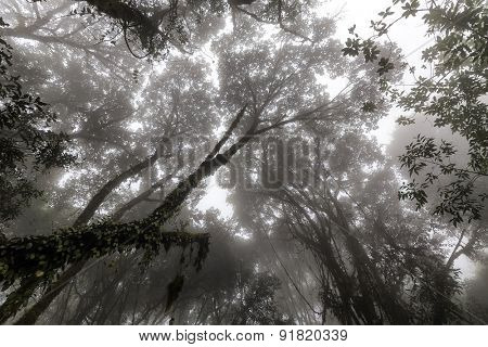 Misty tropical forest in early morning, perspective view from below poster
