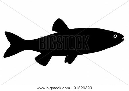 Silhouette Of The Fish Chub