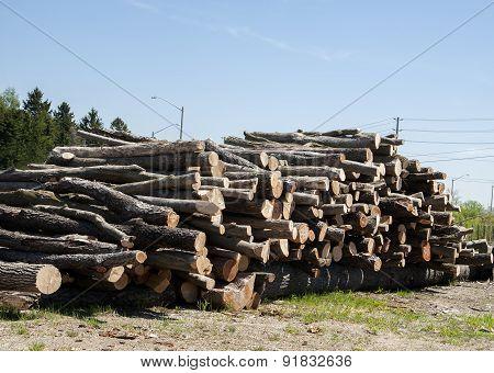 Stacked cut trees in the lumberyard