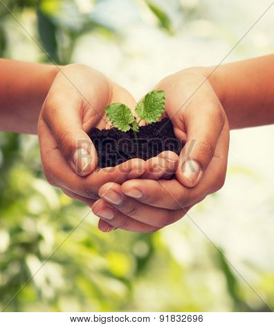 fertility, environment, ecology, agriculture and nature concept - closeup of woman hands holding plant in soil over green background poster