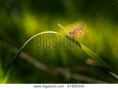 Beautiful Butterfly Sitting On Grass Leaf