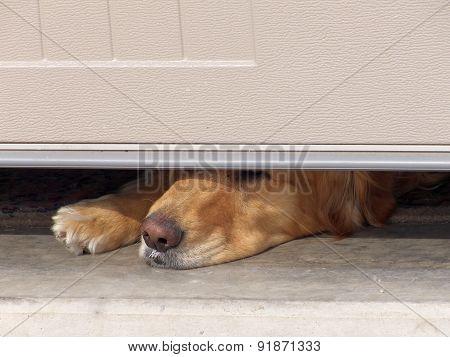 Dog's Nose Under Garage Door