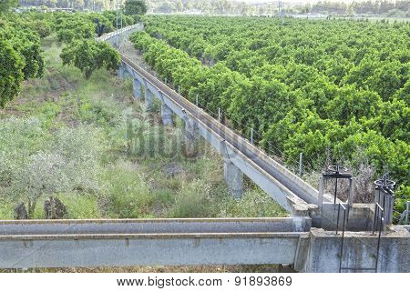 Orange Trees Plantation At Guadiana Meadows, Spain