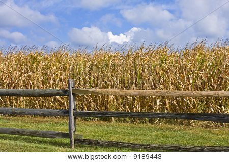 Corn Fields