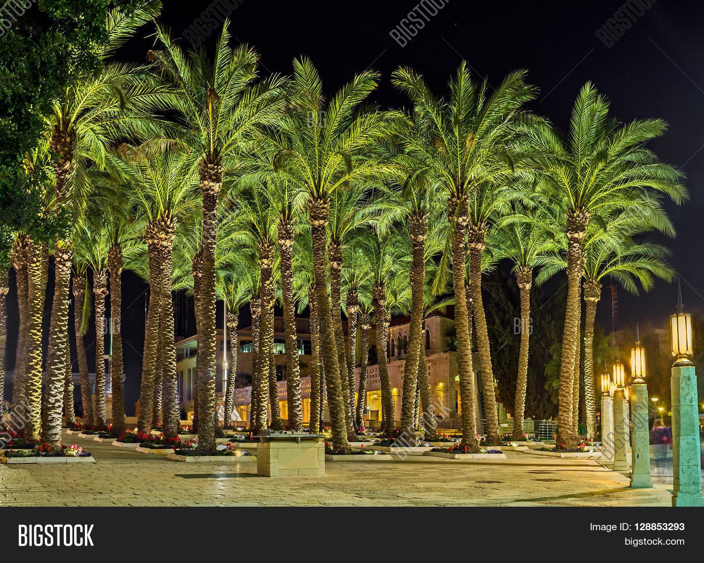 Slender Palm Trees Image & Photo (Free Trial) | Bigstock