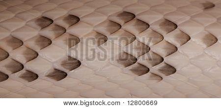 Close-up of Black Rat Snake scales