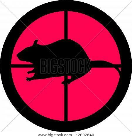 In the Scope Series - Rat
