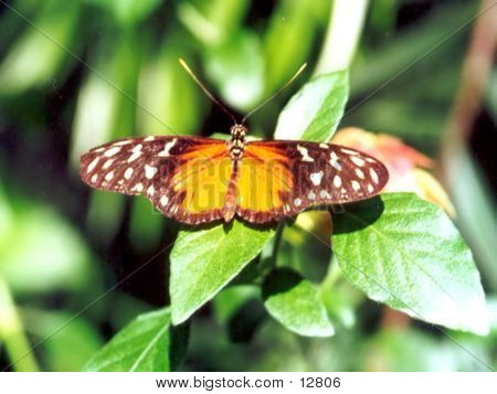 Brown And Yellow Butterfly