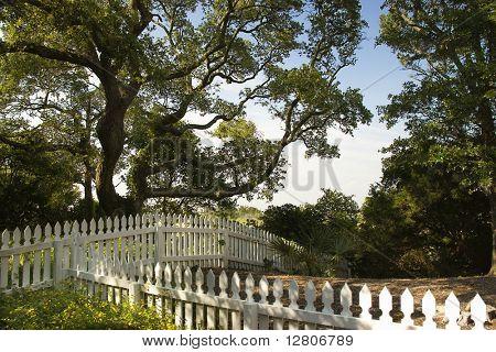 White picket fence with live oak tree on Bald Head Island, North Carolina.