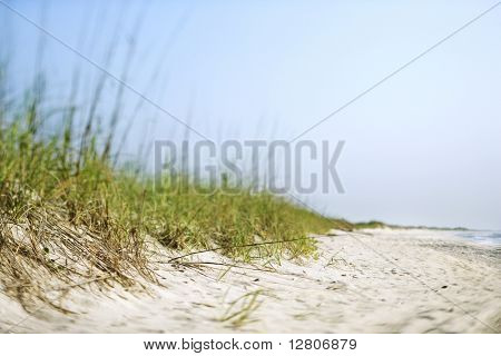 Sand dune with grass at the beach.