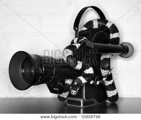 California Kingsnake wrapped around old movie camera.