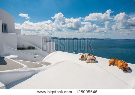 Sleeping dogs in Santorini island, Oia, Greece