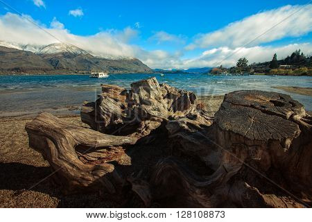 cutting tree stump and wankak lake important traveling destination in south island new zealand