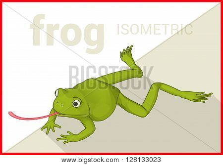 Frog isometric flat 3d illustration. Toad hunting icon. Green amphibian vector.