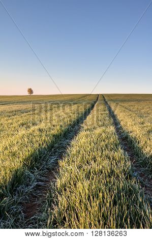 Ruts In Field And Solitaire Tree Under Blue Sky