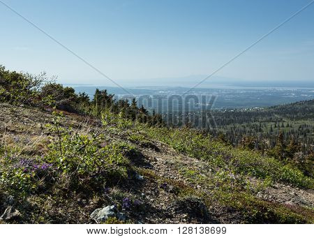 View of Anchorage and Mount Susitna from the surrounding wilderness