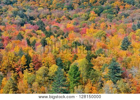 Autumn forest abstract background from Stowe, Vermont