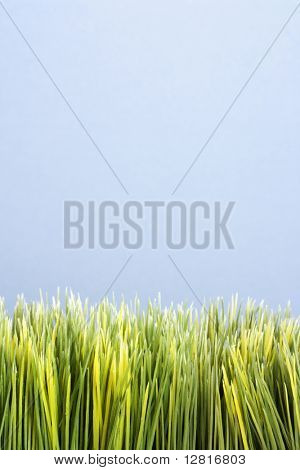 Strip of artificial green grass against blue background.