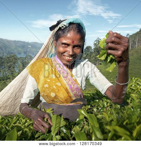 Indigenous Sri Lankan Tea Picker Character Concept