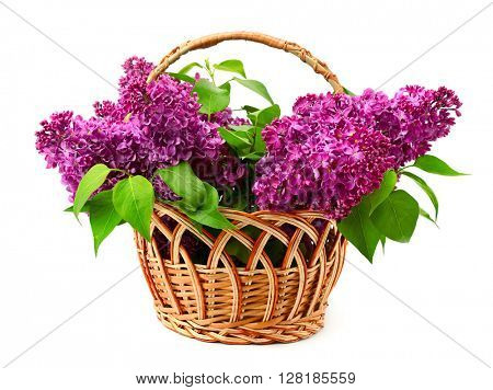 Basket with lilac isolated on white