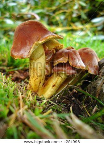 Toadstools On A Tree Stump