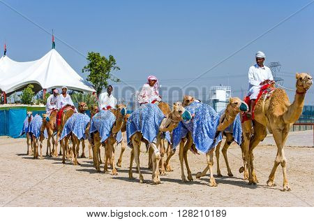 Dubai U.A.E. - February 18 2007: Camel racing in training in the outskirts of the city