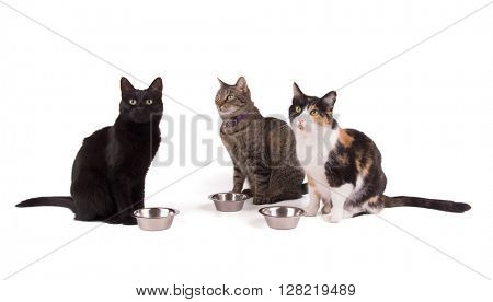 Three cats sitting next to their food bowls, looking up; on white