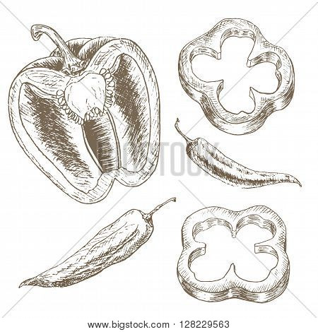 Pepper slice  and chili set. Sketch pepper slice. Hand drawn pepper  slice and chili. Vector   pepper slice illustration. Cut organik vegetable set. Vegetarian and vegan food.
