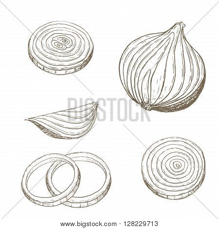 Onion  rings set. Sketch onion slice. Hand drawn onion  rings and slice. Vector onion slice illustration. Cut organik vegetable set. Vegetarian and vegan food.
