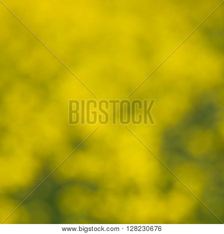 Brassica Napus Yellow Plant Out Of Focus