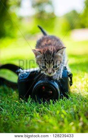 a gray kitten with noname camera, outdoor ** Note: Visible grain at 100%, best at smaller sizes