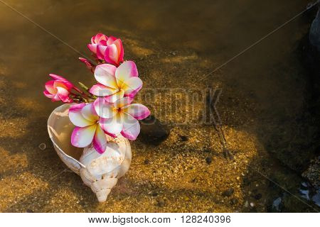 Pink Yellow Flower Plumeria Or Frangipani Bunch In Sea Conch Shell On Sand And Water With Copy Space