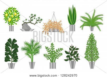 Big and smoll trees house plants collection. Large houseplants in pots for decoration of interiors. Vector illustration house plants in pots isolated on  white background. Bonsai, lemon tree, ficus , palm, ferns and other home plants.