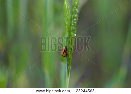 a lady bug perching on a blade of grass