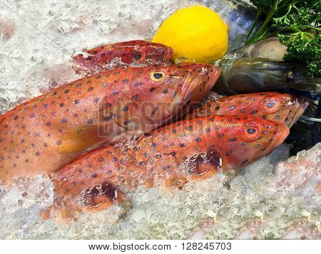 Red grouper fish on ice in the market