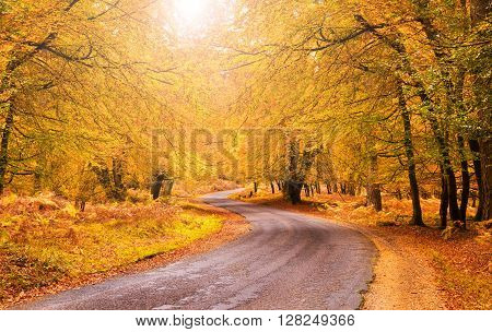 Golden tones accentuated by the low autumn sun - an idyllic location for walking and cycling