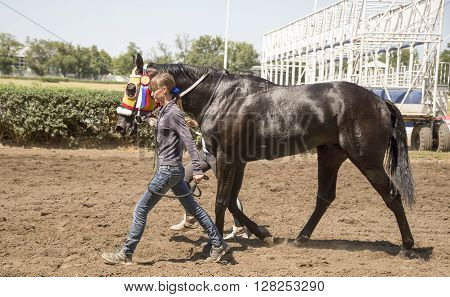 ROSTOV-ON-DONRUSSIA-JULY 20- Beautiful girl leads the horse on July 202014 in Rostov-on-Don