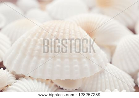 White sea shells closeup background with light cold filter, low angle view, shallow depth of field