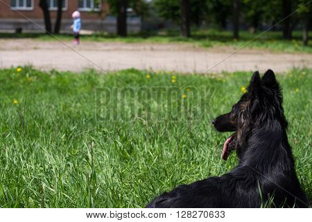 Dog Lying On The Grass And Looks At The Child Who Is Far Away.