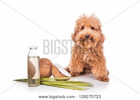 Coconut oil and fats are good and natural ticks and fleas repellent for pets like dogs due to lauric acid. poster
