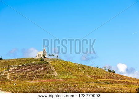 vineyards grand cru in Beaujolais with a church, Fleurie, Rhone-Alpes, France