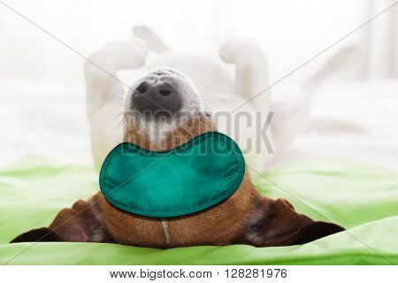dog resting sleeping or having a siesta with eye maskupside down lying