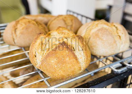 Gluten Free Round Bread