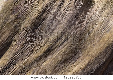 closeup wormhole in wooden. abstract details with texture