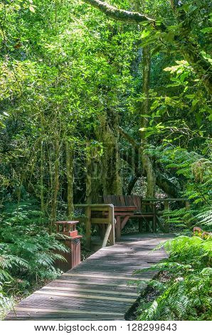 GARDEN OF EDEN SOUTH AFRICA - MARCH 3 2016: A rustic corner at the Garden Of Eden a network of boardwalk trails through the Tsitsikama Forest